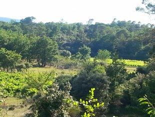 Uitzicht van het zuidterras In de verte een deel van onze wijnranken