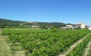 Vakantiehuis: Karaktervol vakantiehuis aan de voet van de Mont Ventoux als deel van voormalige wijnboerderij met gemeenschappelijk zwembad in de Provence.