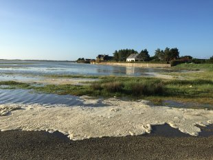 De zee bij de Salines <br>Vlak bij het huis stroomt de zee door de duinen het land in waardoor een soort slufter ontstaat, met een gebied dat bij vloed onderloopt, waar schapen lopen en zeekraal groeit