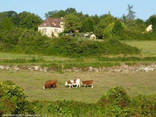 Het uitzicht, gezellig met de koeien