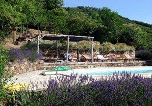 Tuin en ligbedden aan zwembad Tuin en ligbedden aan zwembad