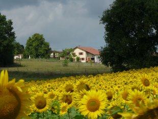 Vakantiehuis: Vakantiehuis met vier sterren op kindvriendelijk landgoed. Een 9.8 en Golden award op Zoover! te huur in Gers (Frankrijk)