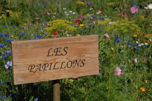Welcome to Les Papillons