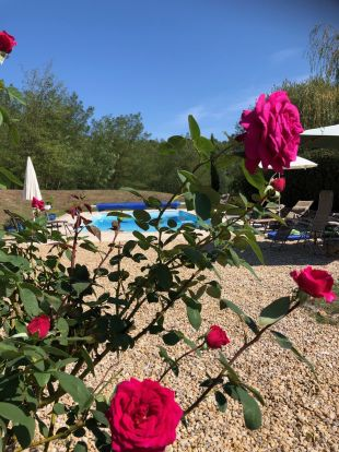 View of the Swimming pool <br>View of the swimming pool through the rose bushes